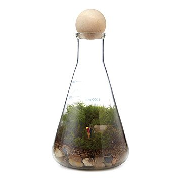 We Have Chemistry Terrarium