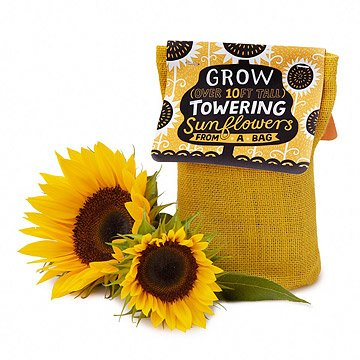Sunflower in a Bag Grow Kit