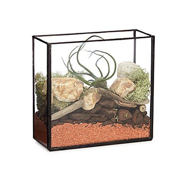 Brass Box Terrarium Kit