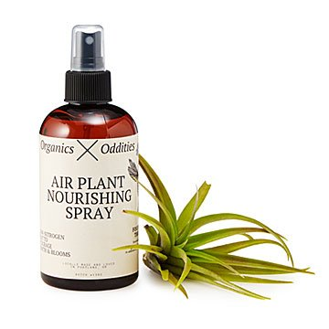 Nourishing Air Plant Spray